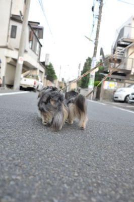 20110724_2.jpg
